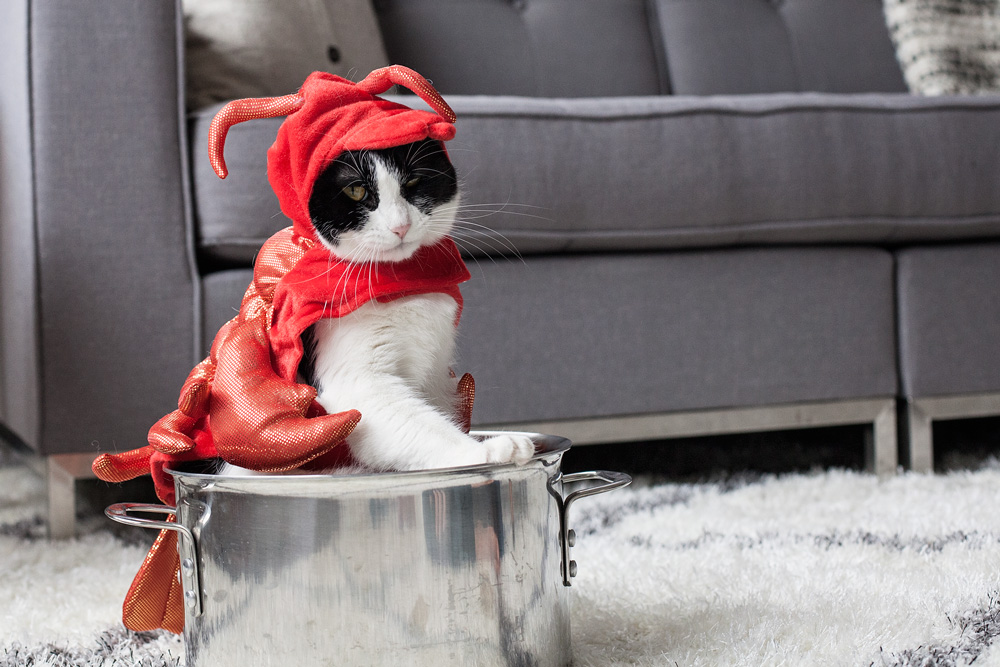kitty-costume-tryouts-swheat-kitty-litter-halloween-costume-dressing-up-your-cat-corporate-catwalk-family-blog-pets-nyc-new-york-city-16