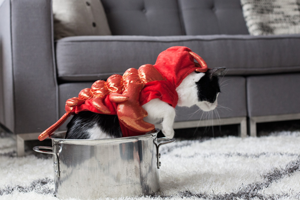 kitty-costume-tryouts-swheat-kitty-litter-halloween-costume-dressing-up-your-cat-corporate-catwalk-family-blog-pets-nyc-new-york-city-17