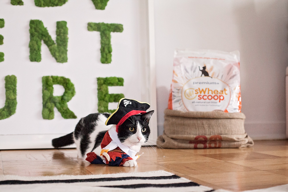 kitty-costume-tryouts-swheat-kitty-litter-halloween-costume-dressing-up-your-cat-corporate-catwalk-family-blog-pets-nyc-new-york-city-7