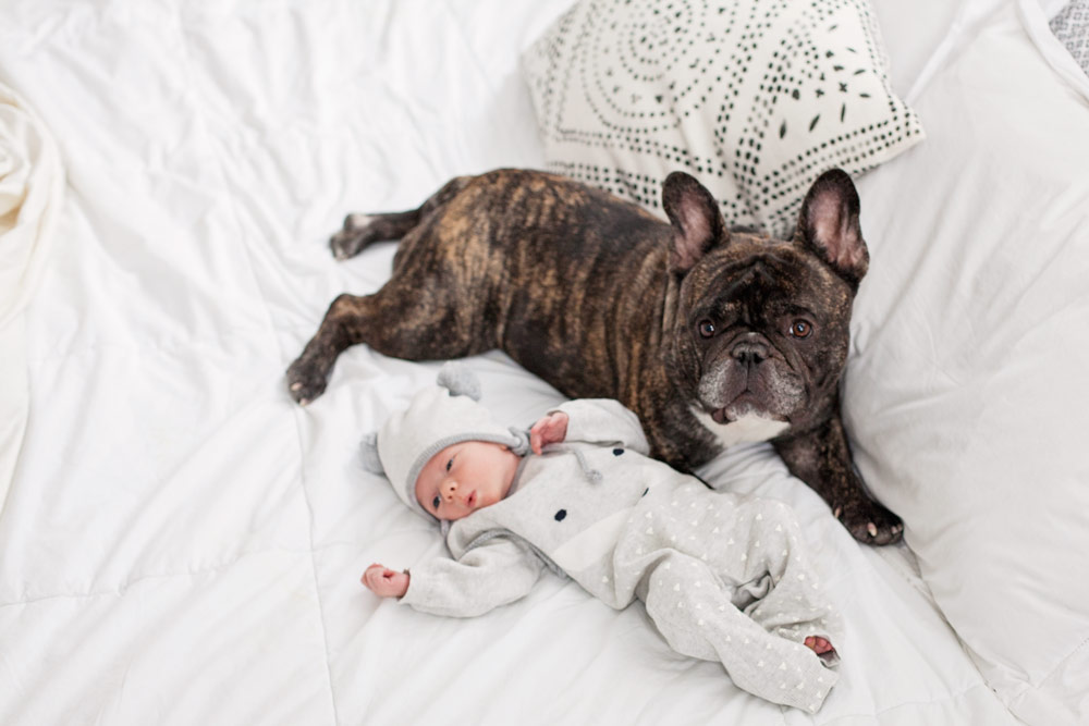 Having pets and a new baby