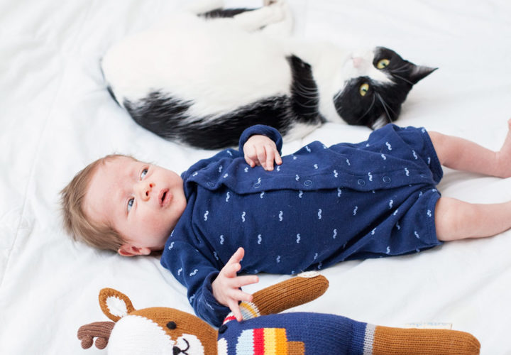 My Unexpected Experience with Pets and a New Baby